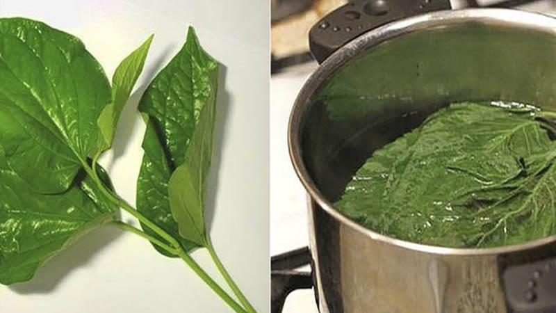Nấu nước lá lốt để ngâm, rửa các tổn thương