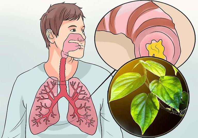 Trầu không được sử dụng trong điều trị nhiều bệnh hô hấp