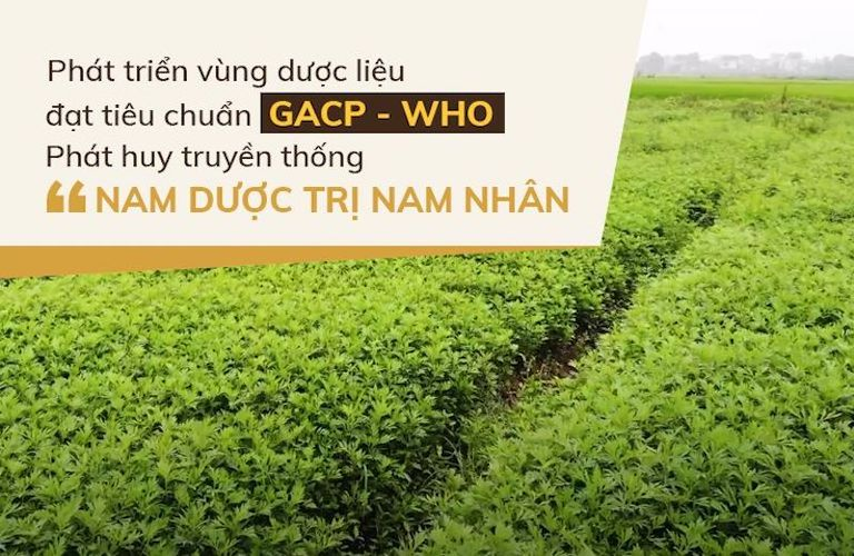 Vườn dược liệu an toàn, chất lượng của Đỗ Minh Đường