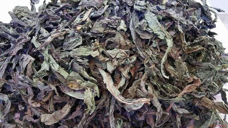 Lá khôi tía là vị thuốc dân gian trị trào ngược được ưa chuộng sử dụng