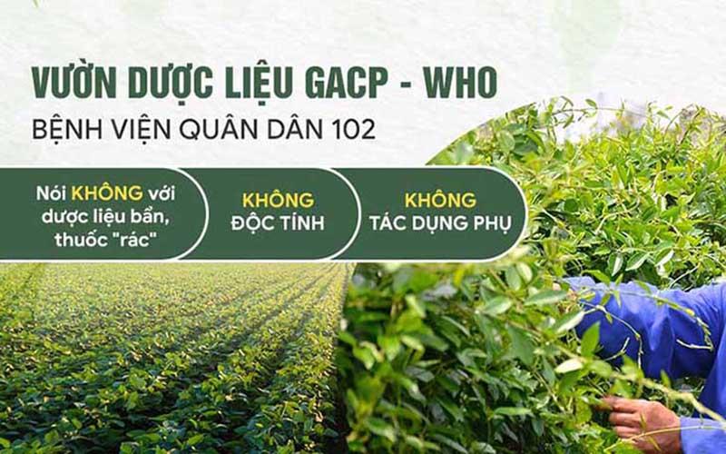Bệnh viện Tai Mũi Họng Quân dân 102 sử dụng 100% dược liệu đạt chuẩn GACP - WHO