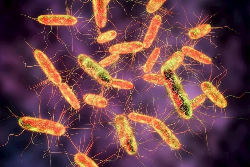 Nguyên nhân chính gây viêm là do nhiễm virus, vi khuẩn gây hại
