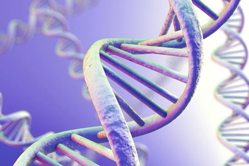 Di truyền là nguyên nhân phổ biến nhất của chàm đỏ