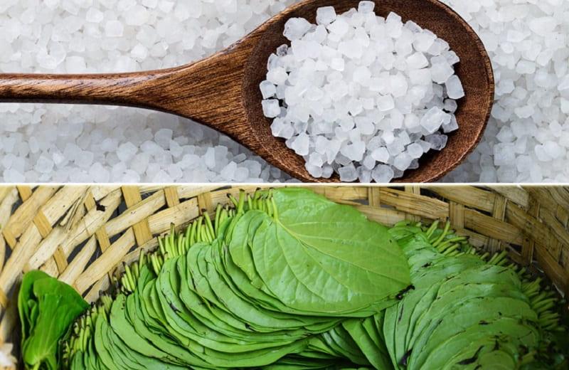 Sử dụng muối và lá trầu không trị tổ đỉa