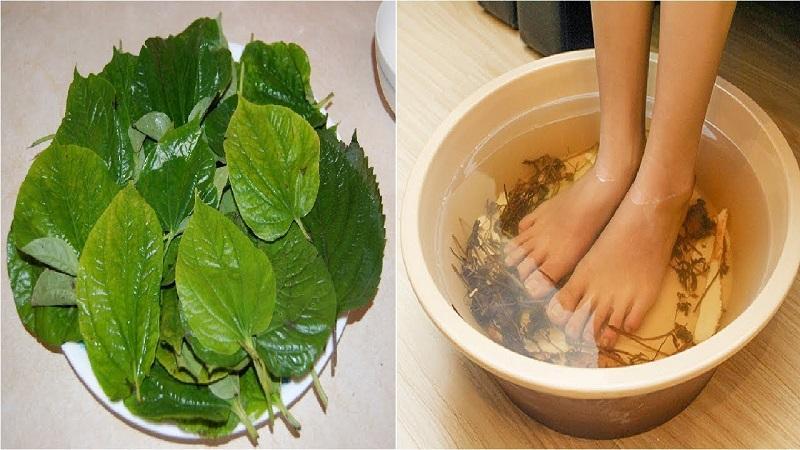 Sử dụng lá lốt để nấu nước ngâm chân giúp giảm ngứa
