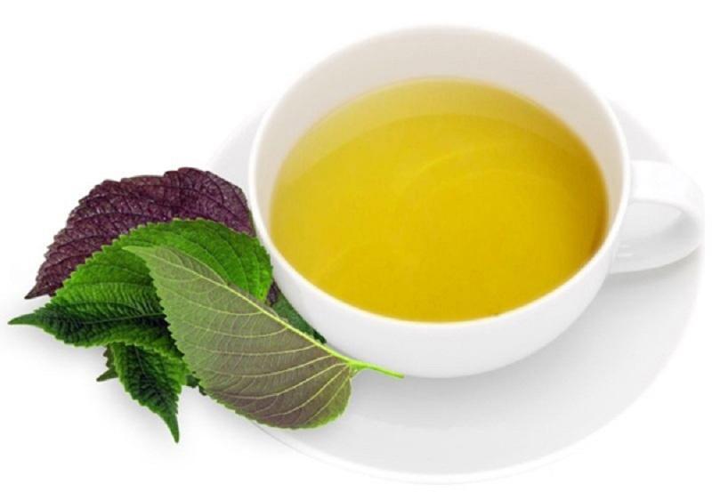 Trà lá tía tô là thức uống an toàn dành cho người viêm amidan