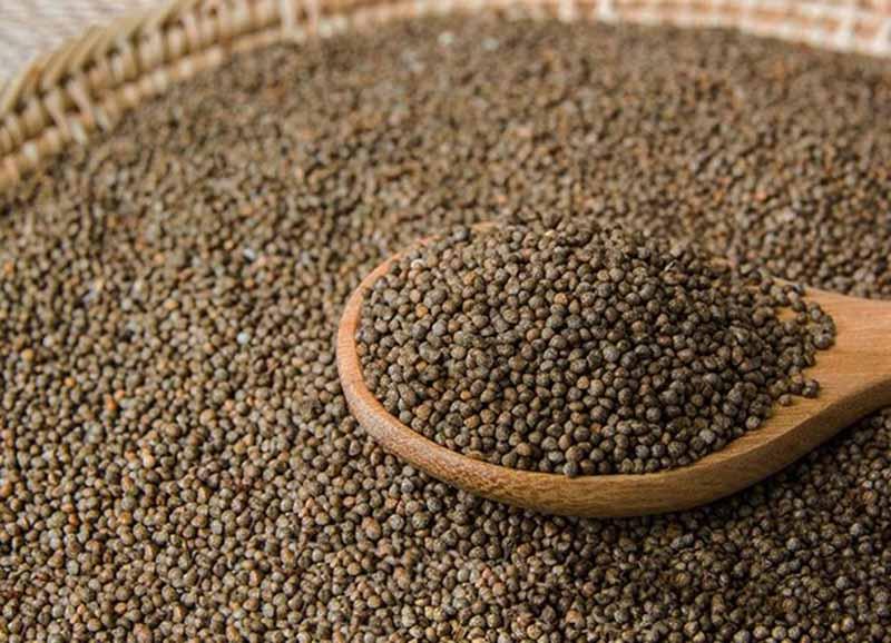 Hạt lá tía tô cũng được sử dụng nhiều để chữa bệnh