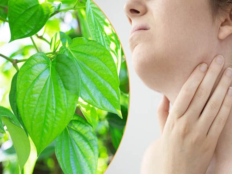 Chữa viêm amidan bằng lá trầu không được nhiều người áp dụng và có hiệu quả