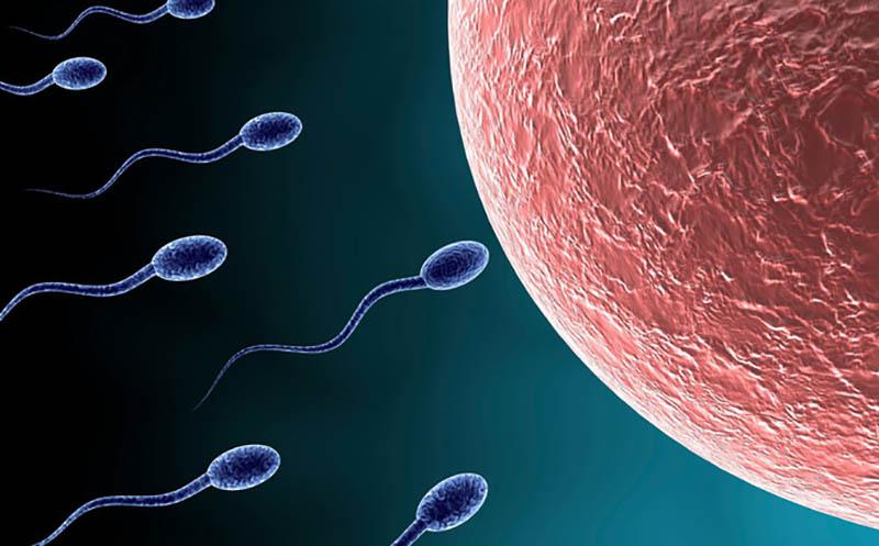 Quá trình thụ thai diễn ra khi tinh trùng của nam giới xâm nhập vào cơ thể nữ giới qua đường âm đạo