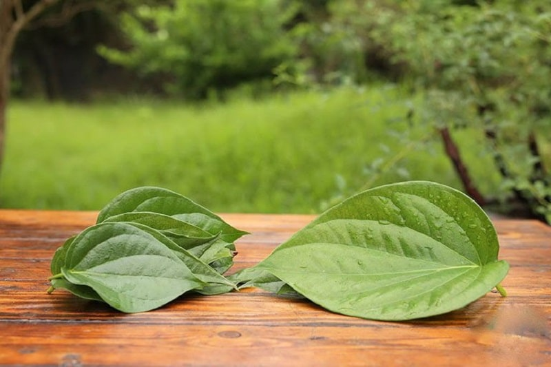 Người bệnh có thể dùng lá trầu không để rửa hoặc chà xát vùng da bị viêm
