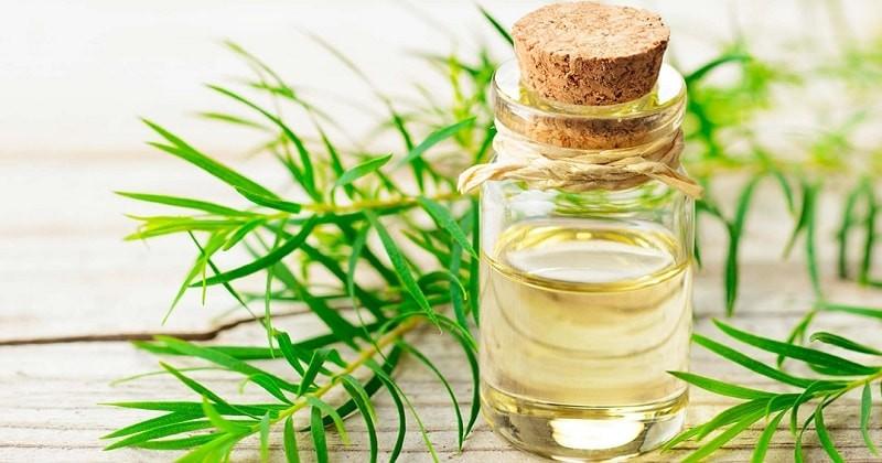 Tinh dầu tràm trà sẽ giúp mụn bớt sưng đỏ, kháng viêm hữu hiệu