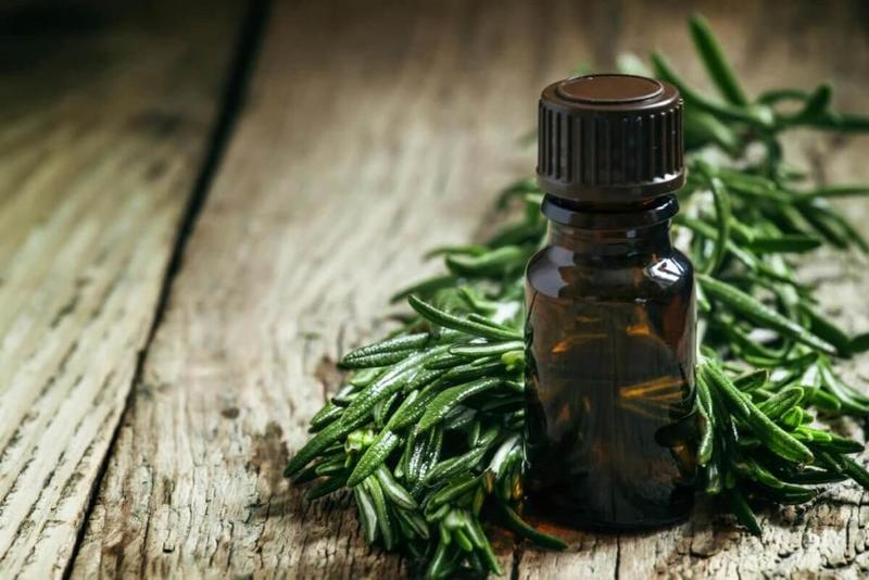 Tinh dầu tràm trà chứa các hợp chất giúp kháng khuẩn, giảm sưng viêm tại các nốt mụn