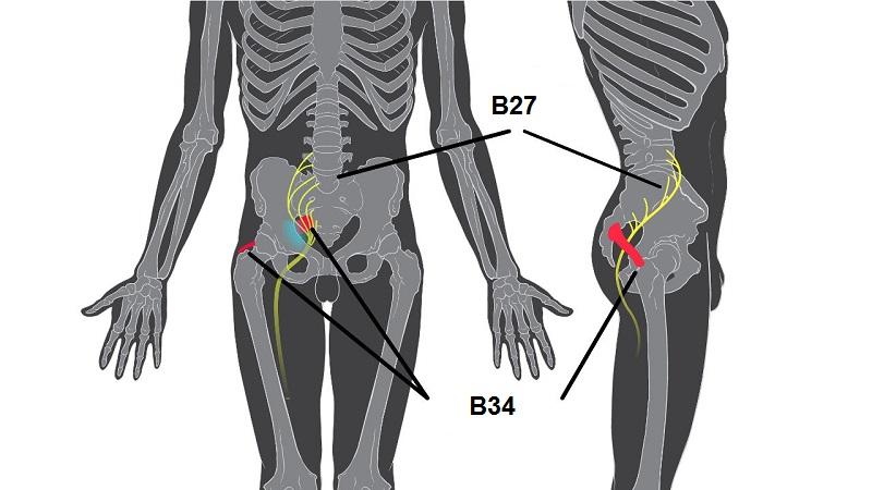 Các huyệt ở xương chậu có ảnh hưởng lớn tới cơ quan sinh lý ở nam giới