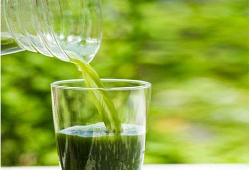 Uống nước lá khế kích thích đào thải độc tố