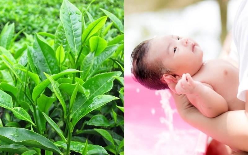 Một số loại nước lá thảo dược có thể hỗ trợ giảm ngứa cho con