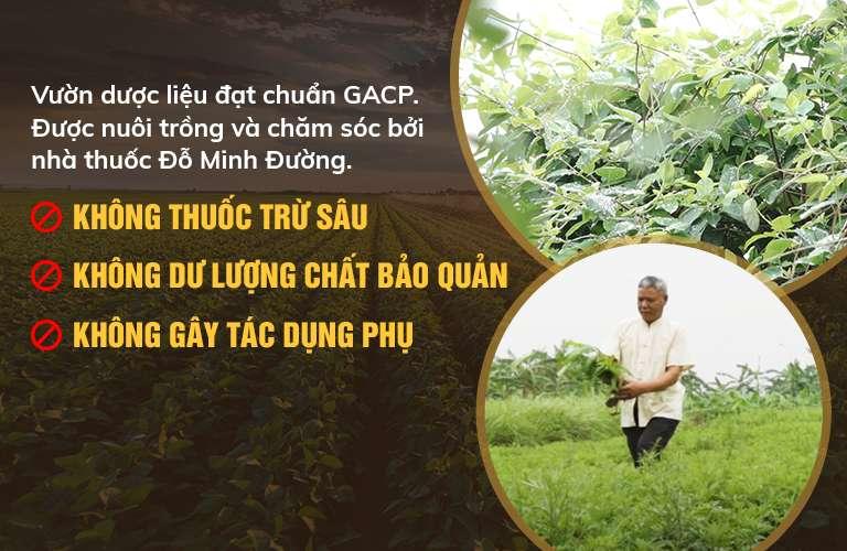 100% dược liệu sạch, đạt tiêu chuẩn GACP-WHO