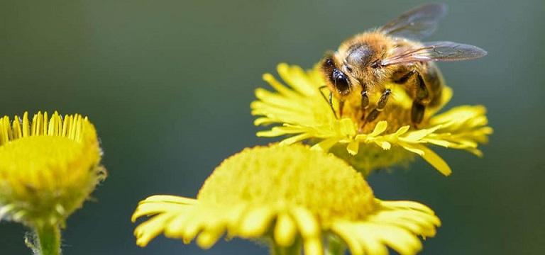 Phấn hoa là một trong những nguyên nhân gây dị ứng thời vào mùa hè