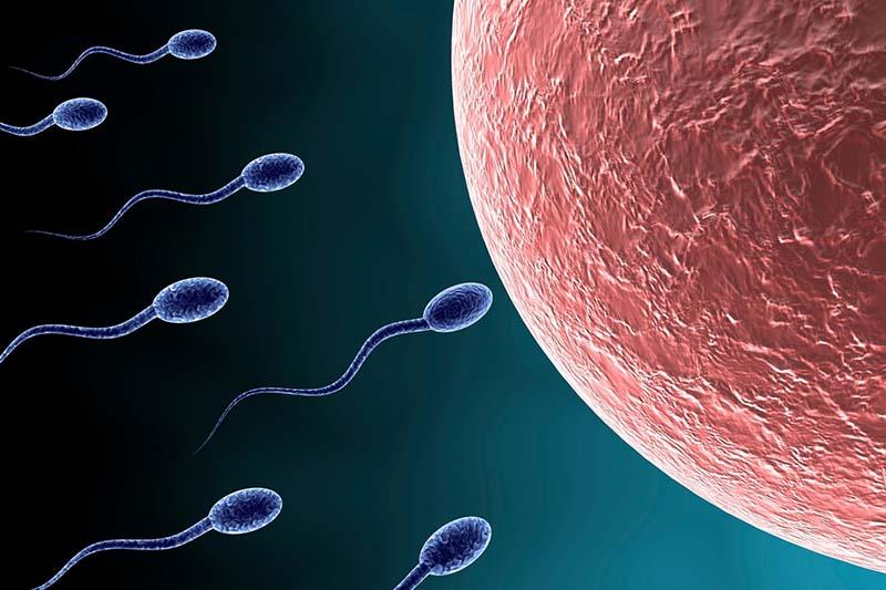 Xuất tinh nhiều khiến chất lượng tinh trùng giảm