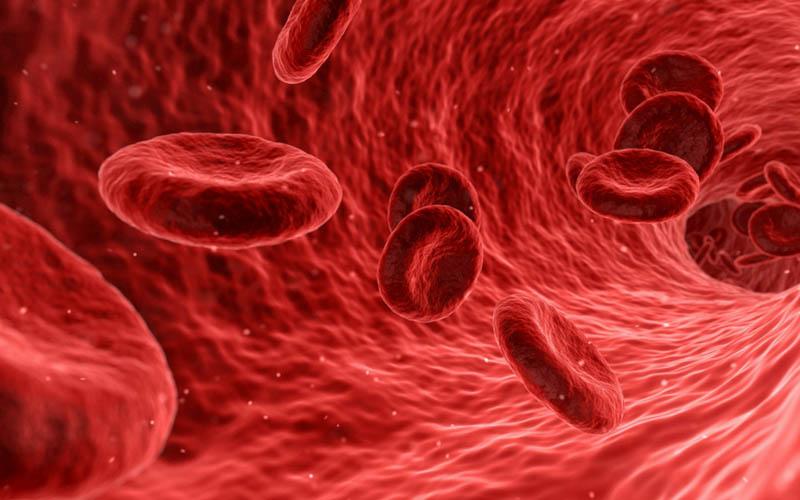 Ăn thịt của trăn giúp tăng cường tuần hoàn máu trong cơ thể