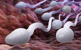 tinh trùng yếu có ảnh hưởng đến thai nhi không